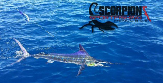 Scorpion Sportfishing
