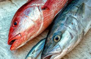 Baja Bytes weekly catches