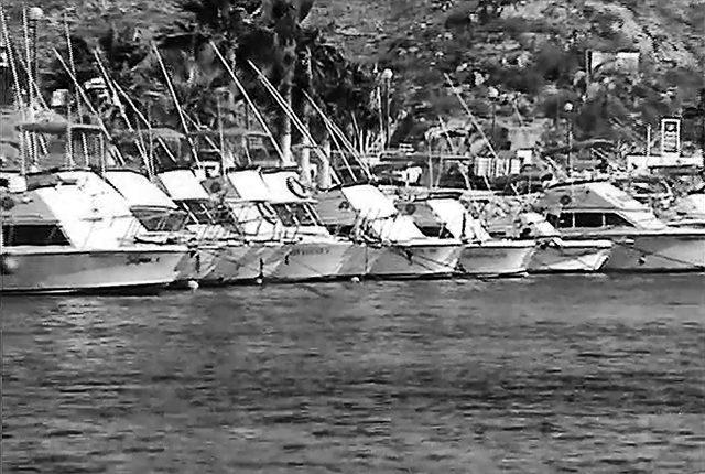 cabo sportfishing
