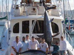 sword tuna