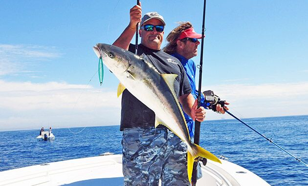 yellowtail iron