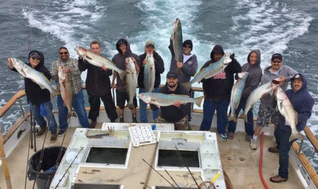 fishing report bigger seabass and yellows being caught - Excellent Spring Fishing