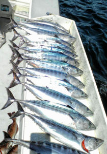 Sportfishing Ensenada