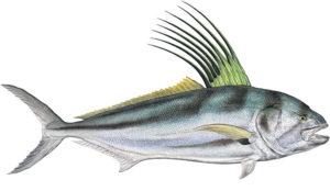 Jesus Araiza roaster fish
