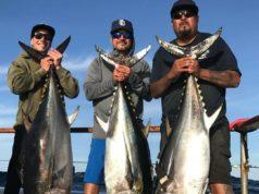 bluefin report