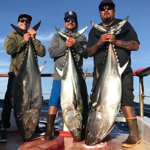 Bluefin  yellowtail fishing