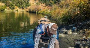 trout id fishing California Q&A