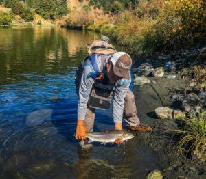 trout id fishing California Q&A