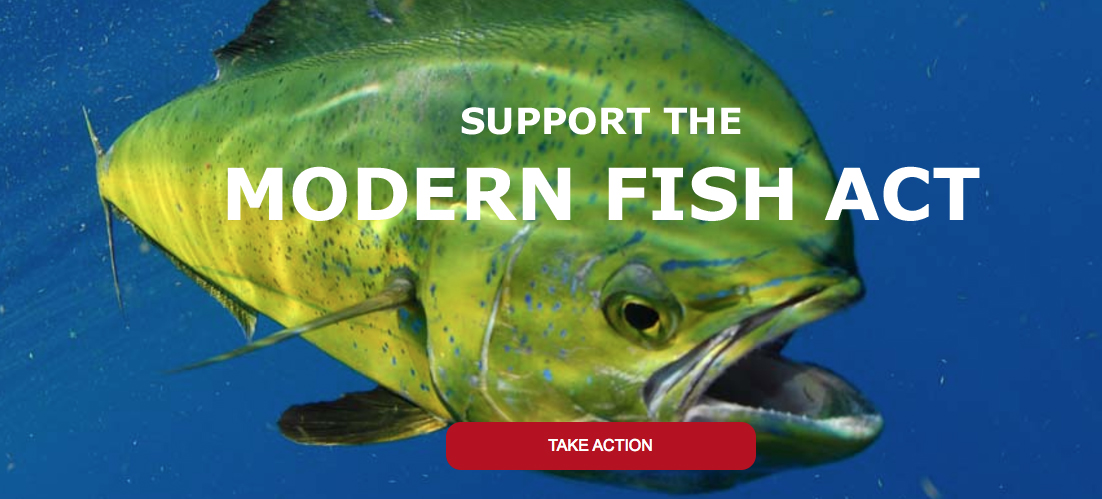 Modern fish act learn about and support it bd outdoors for Georgia game and fish