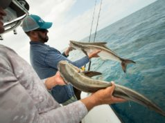 cobia fishing Local Knowledge Episode 4