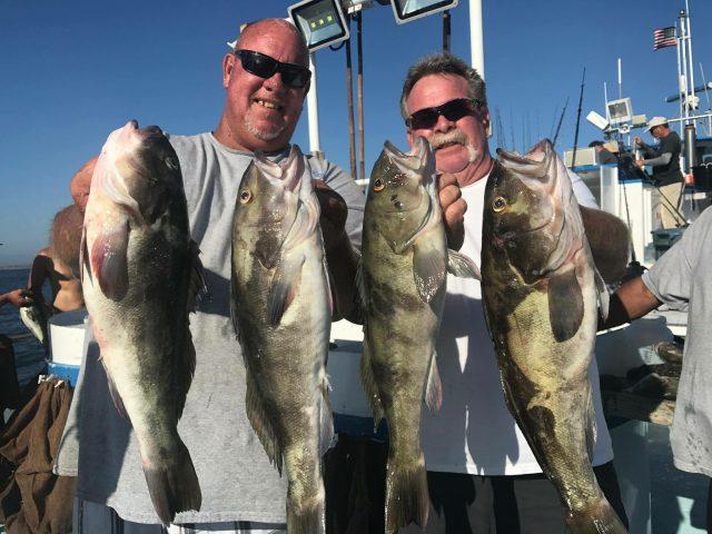 Fish Caught SeaBass