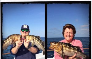 May Gray seabass caught