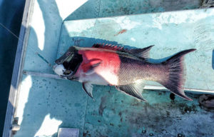 weekly baja fishing report colorful fish
