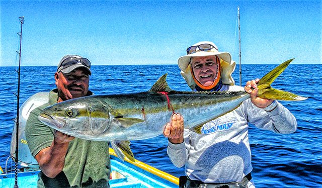 baja fishing report yellowtail