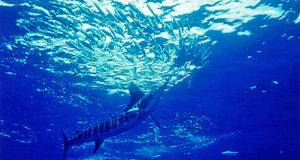 nautical sportfishing