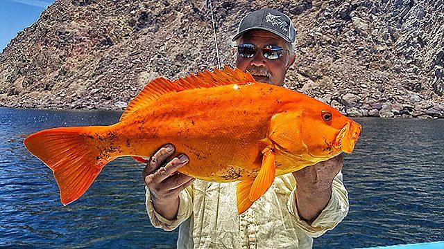Fish Caught Baja Bytes