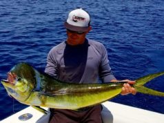 Baja dorado fishing caught