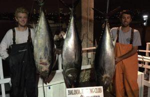 Bluefin tuna Fish in Bite
