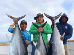 picky bluefin