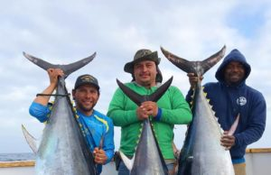 bluefin and yellowfin tuna