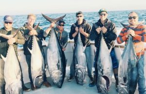 bluefin caught