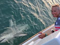 awa shark derby cory