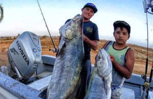 halibut fish caught