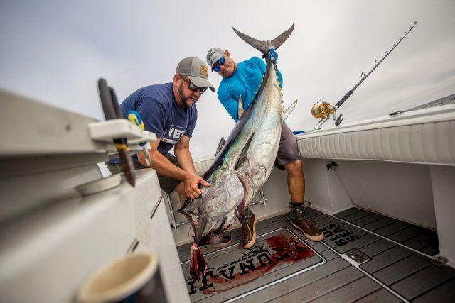 bluefin tuna fish caught good old days