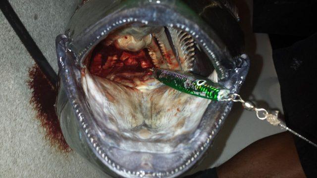 tuna bite