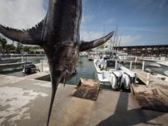swordfish longline