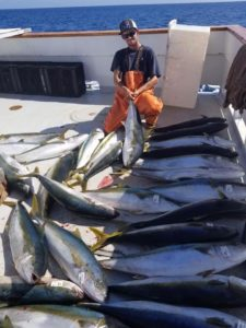lots of big yellowtail on a sport boat