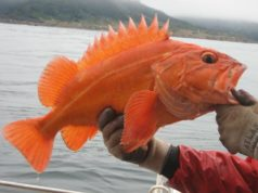 groundfish regulations