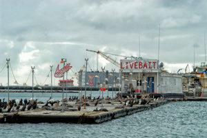 Everingham Bros bait barge