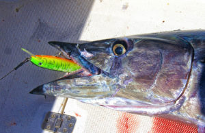 baja fishing reports
