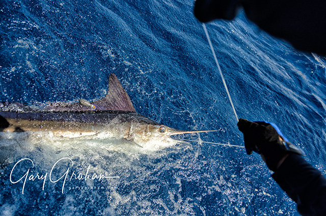 Baja Sportfishing reports