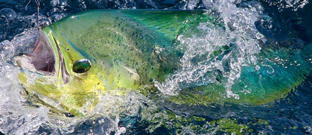 Costa Rica dorado - Crocodile Bay Resort