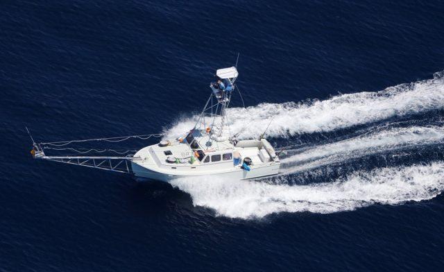 bluefin harpooning