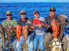 baja sportfishing