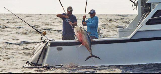 kite fishing mustad