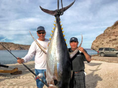 giant yellowfin