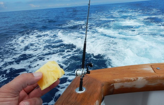 trolling for sailfish