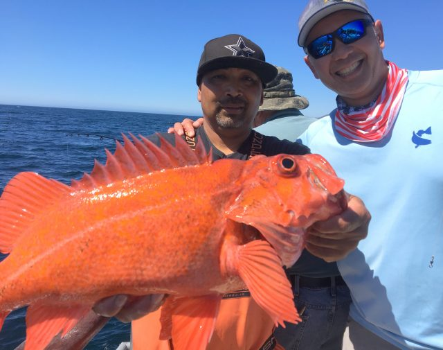 Channel Islands rockfish aboard the Aloha Spirit