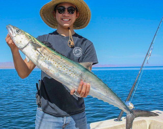 baja sportfishing sierra