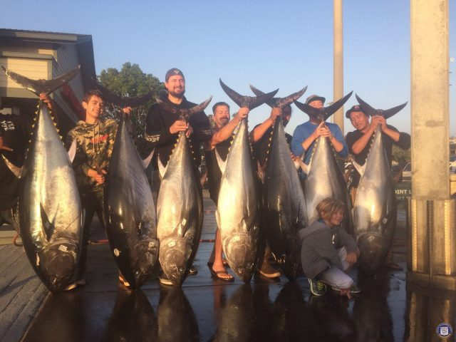 yellowfin and bluefin - Offshore Party