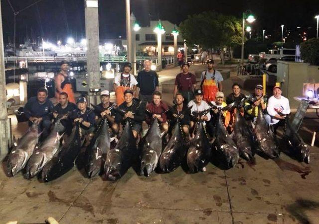 bluefin dominate