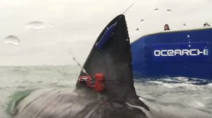 Ocearch tag along