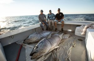 Bd Boat Spotlight 15 Foot Whaler Rigged For Inshore Fishing