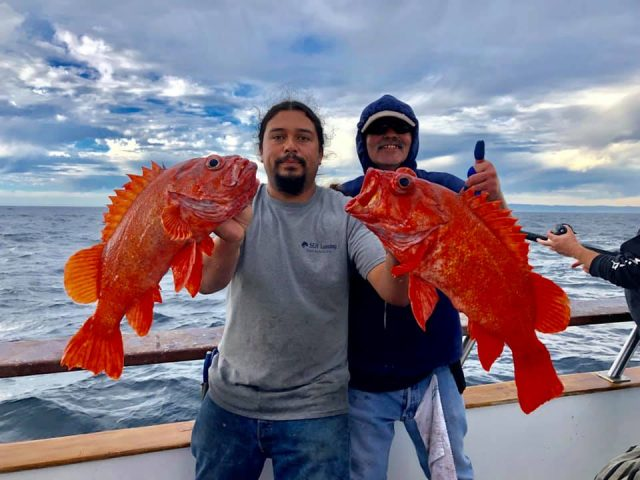 rockfish report - SoCal Bluefin Bite
