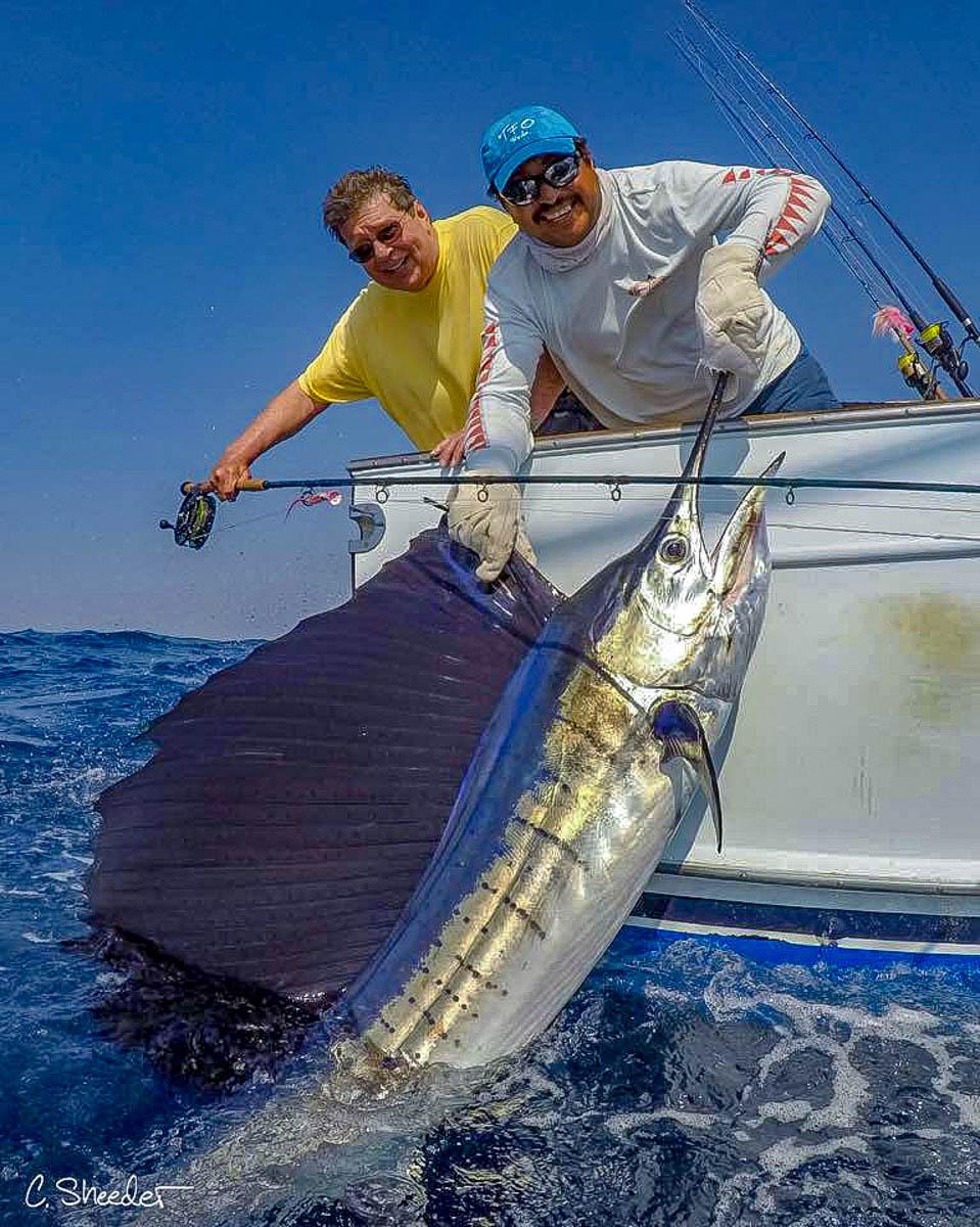 Baja Billfish Yellowfin
