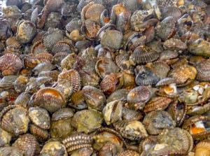 magbay-clams-300x223.jpg